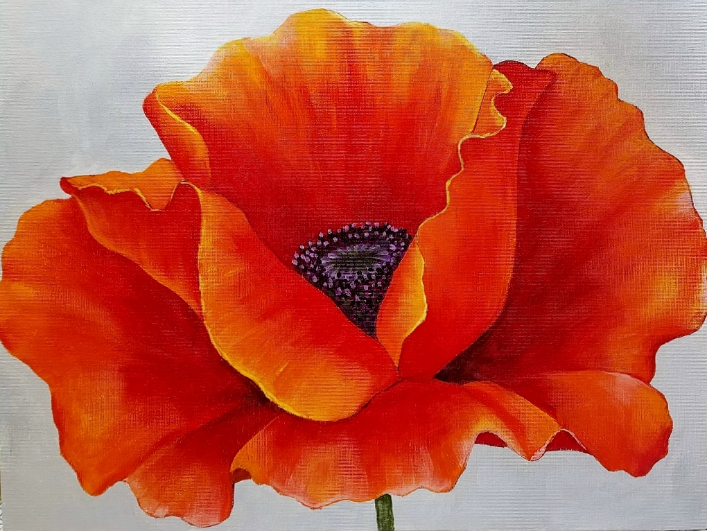 Teaching Art of Red Poppy