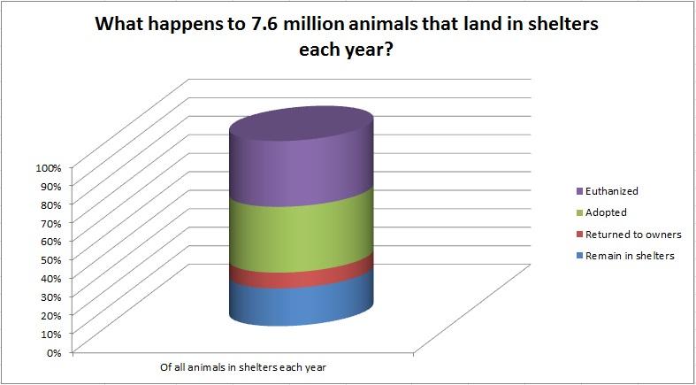 shelter animal statistics