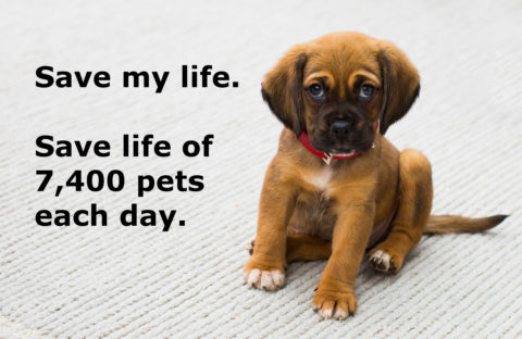 7,400 pets are killed every day in the US