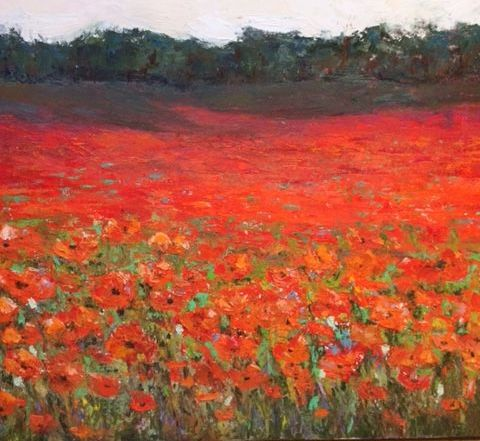beautiful field of poppies